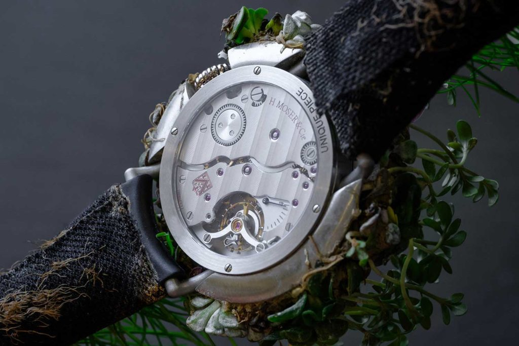 Nature Watch, back
