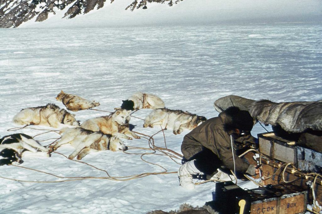 During the expedition, dog-pulled sleds were the easiest way to travel