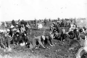 Children digging frozen potatoes in a collective farm