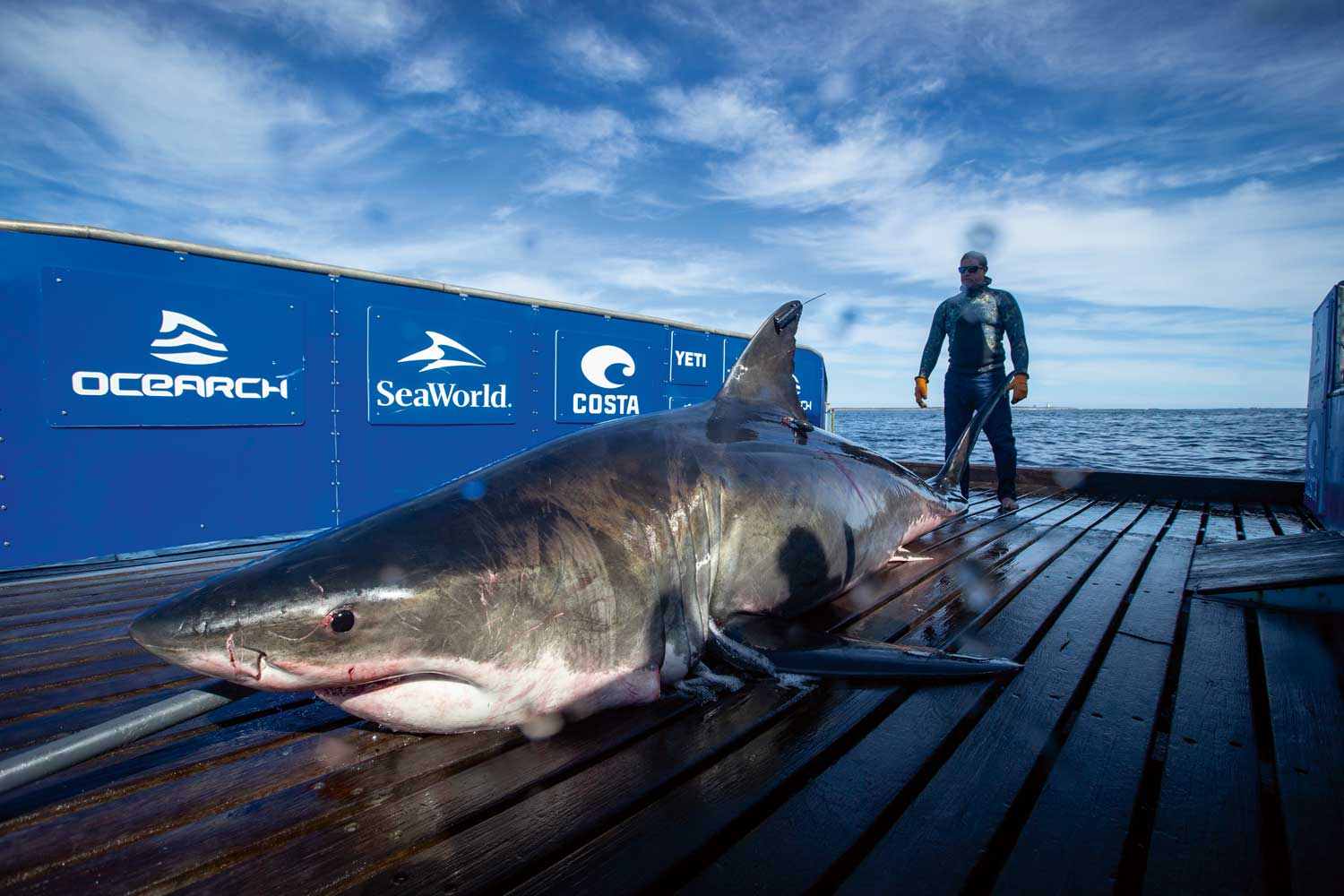 For its 28th expedition, OCEARCH launched an expedition in the Lowcountry - Georgia, South Carolina, and North Carolina - during which the team sampled and tagged Hilton, a mature male white shark