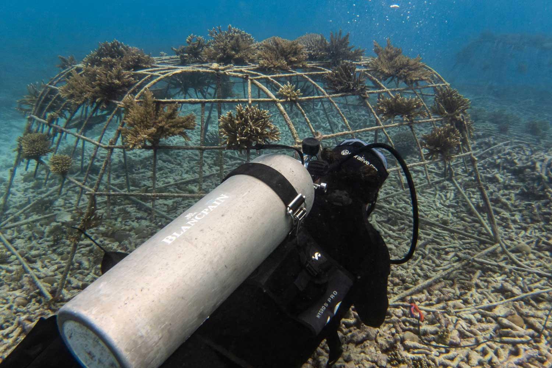 Fregate Island Coral Restoration