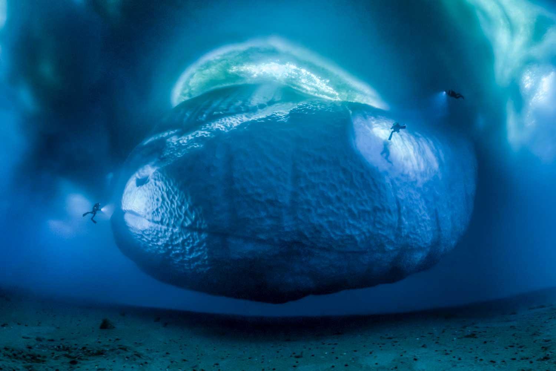 Gombessa III, Antarctica Winning Photograph, Wildlife Photographer of the Year 2017 (Credit: Laurent Ballesta)