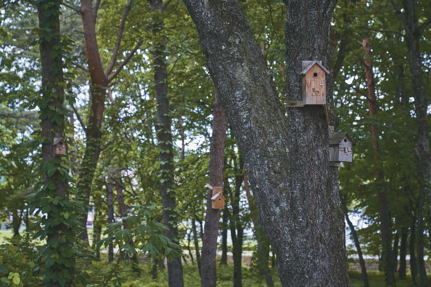 Birds and squirrel houses are installed on-site, and regular maintenance is performed to observe its habitat.